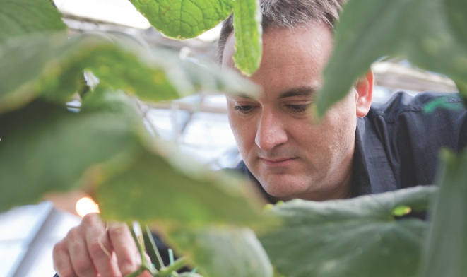 MSU researcher Brad Day studying plants