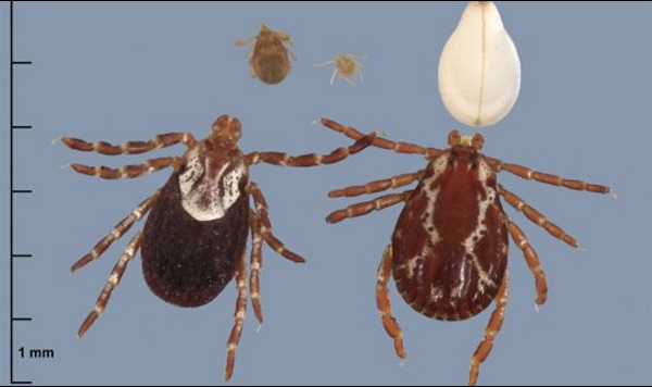 Graphic with ticks